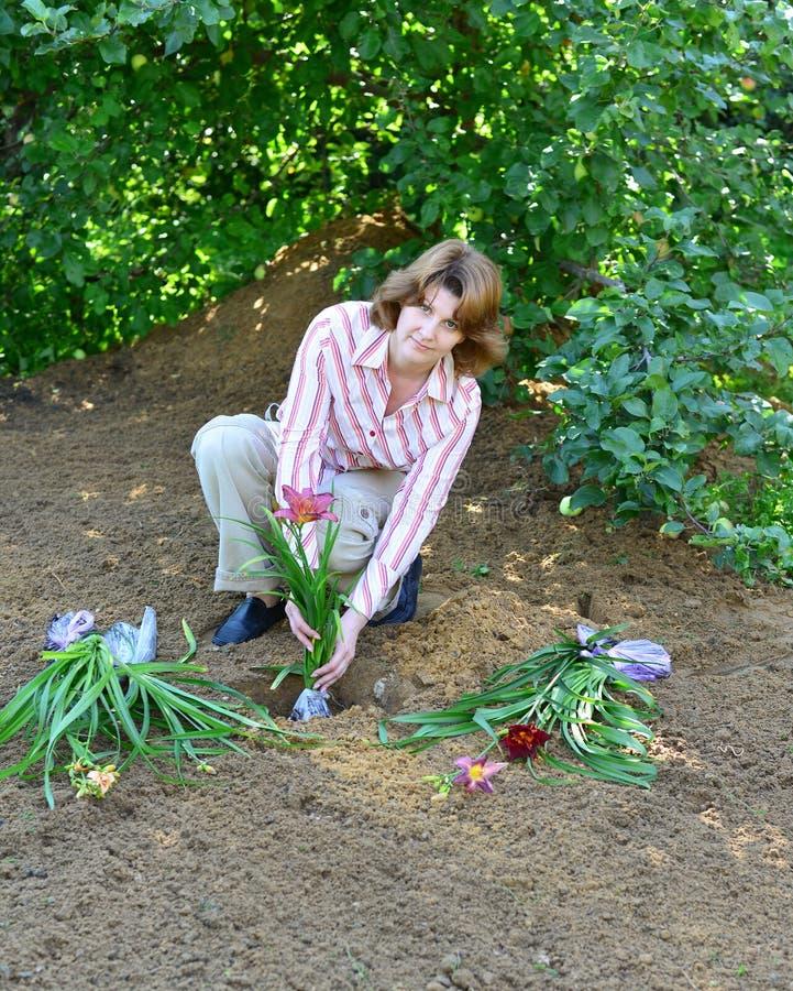 Kvinna som planterar blommor i trädgård fotografering för bildbyråer