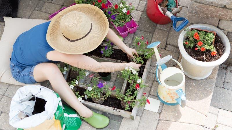 Kvinna som planterar petuniaplantor arkivfoto