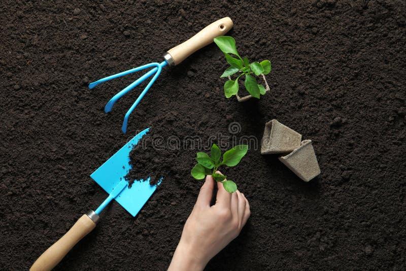 Kvinna som planterar plantan i near arbeta i trädgården hjälpmedel för jord arkivbilder
