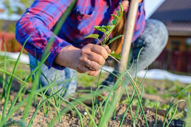 Kvinna som rensar hennes grönsaklapp i vår royaltyfri foto