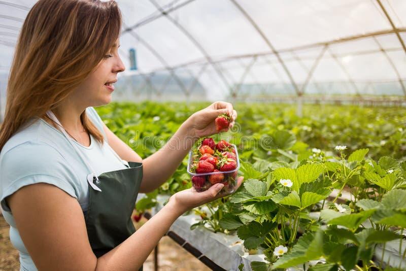 Kvinna som rymmer en saftig biten jordgubbe in i kameran, strawber royaltyfri fotografi