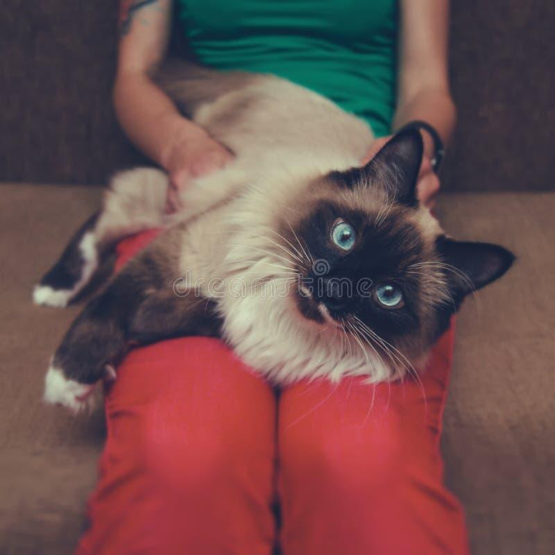 Kvinna som rymmer en siamese katt arkivbilder