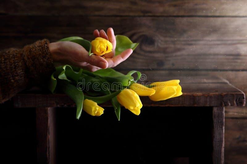 Kvinna som rymmer en Tulip Bud royaltyfri foto