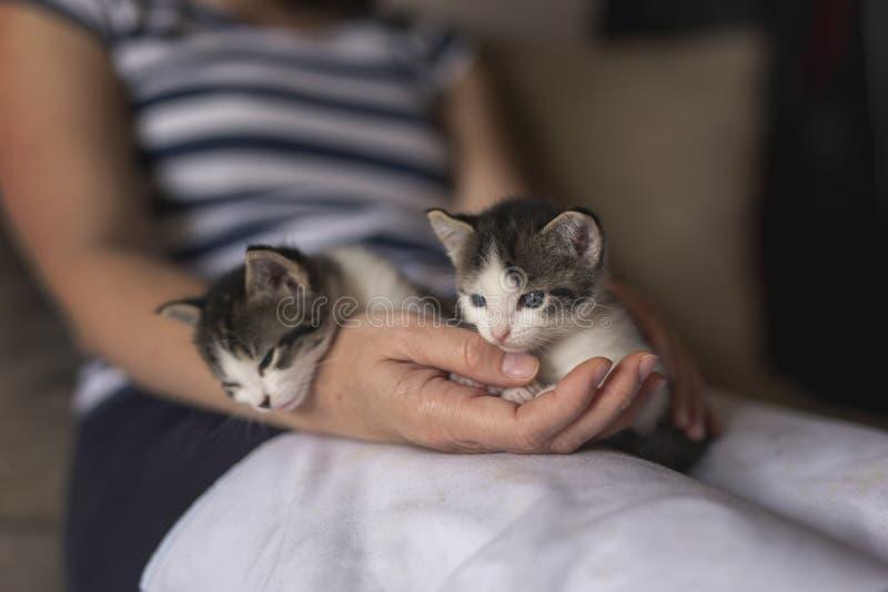 Kvinna som rymmer två gulliga kattungar arkivbild