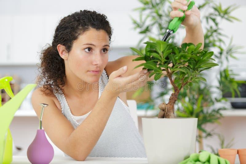 Kvinna som sköter växten arkivfoton