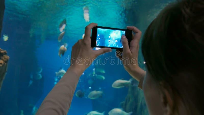 Kvinna som tar bilder av fiskar med smartphonen arkivbild