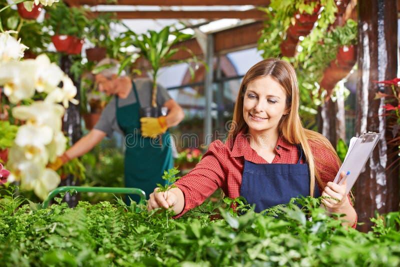Kvinna som trädgårdsmästaren som tar omsorg av växter arkivbild