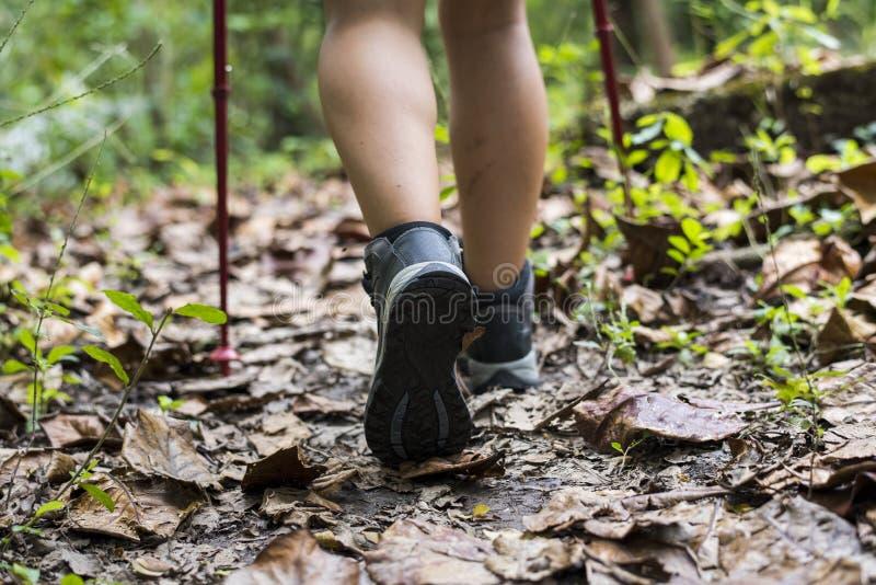 Kvinna som Trekking i en skog royaltyfri bild