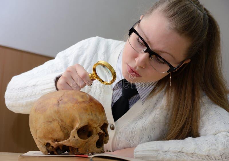 Kvinna som undersöker en mänsklig skalle arkivfoton