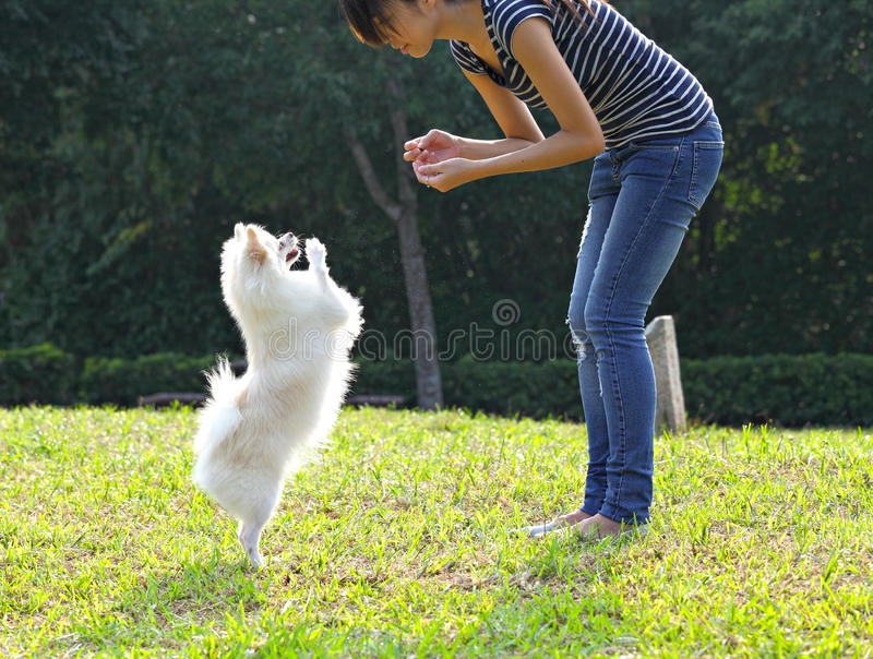 Kvinna som utbildar hennes hund royaltyfri foto