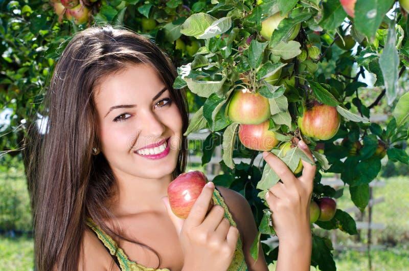 Kvinna som väljer ett moget äpple från trädet. royaltyfria bilder