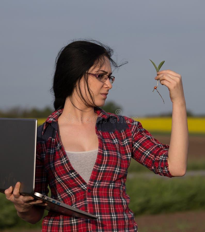 Kvinnaagronom som tar omsorg av groddar i fält arkivfoton