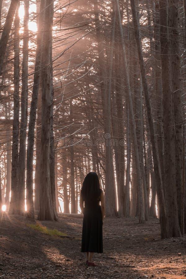 Kvinnaanseende i skog för cypressträd royaltyfria bilder