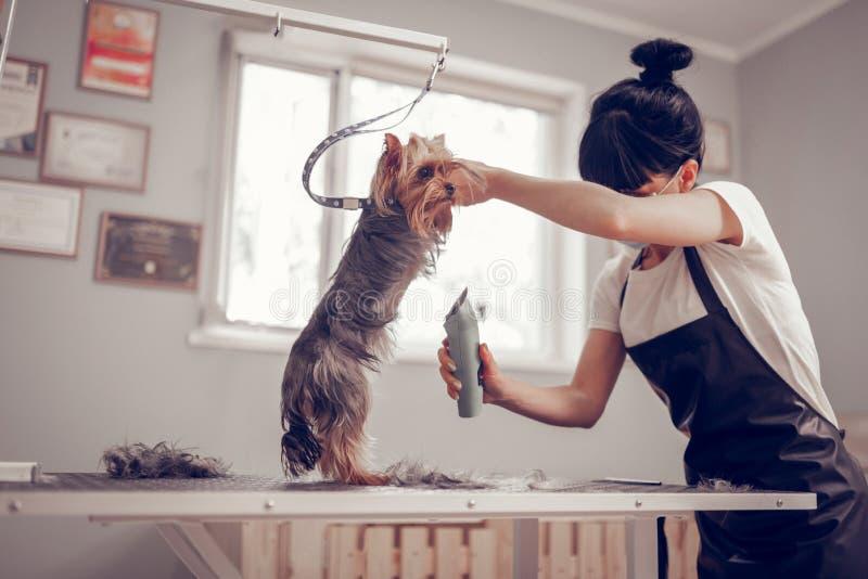 Kvinnaanseende nära fönster, medan raka den lilla gulliga hunden royaltyfri foto
