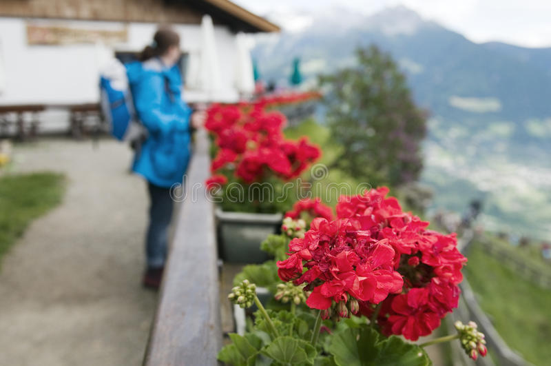 Kvinnaanseende vid blommorna fotografering för bildbyråer