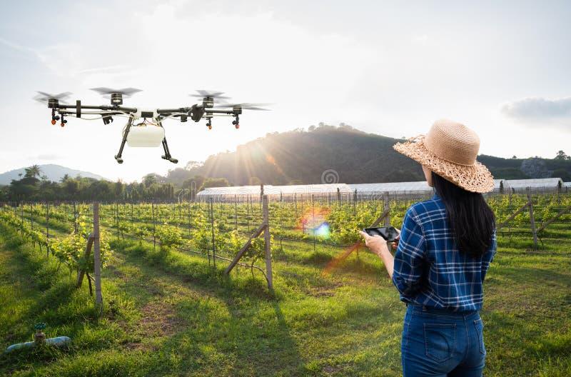Kvinnabonde att använda flugan för surr för smart telefonkontroll den åkerbruka till besprutad gödningsmedel på druvafälten, smar arkivfoto