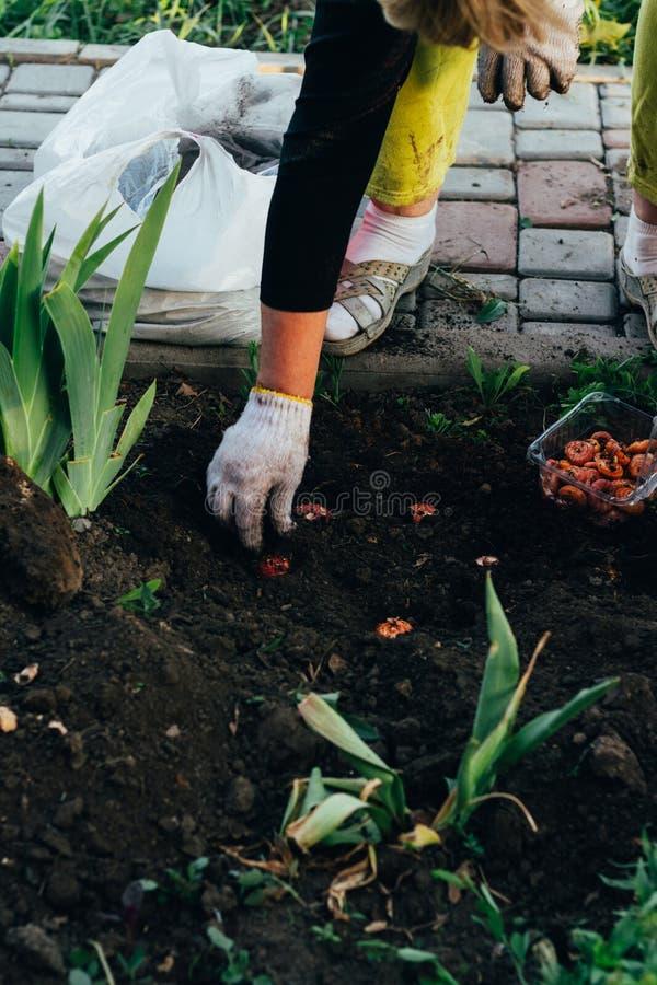 Kvinnabonden tar omsorg av växterna på kolonin lantbruk royaltyfria bilder