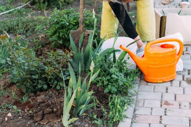 Kvinnabonden tar omsorg av växterna på kolonin lantbruk tillfoga gödningsmedel royaltyfri fotografi