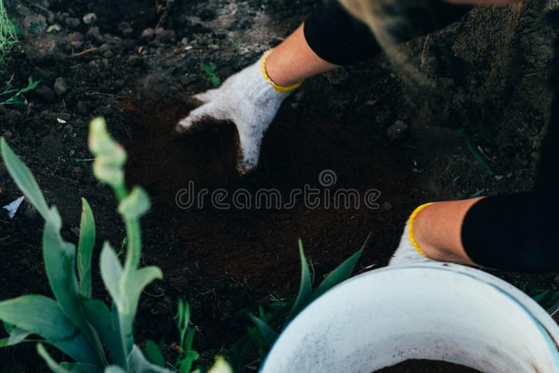 Kvinnabonden tar omsorg av växterna på kolonin lantbruk tillfoga gödningsmedel fotografering för bildbyråer