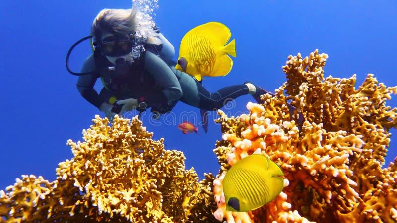 Kvinnadykare och par av den härliga gula korallfisken royaltyfria foton