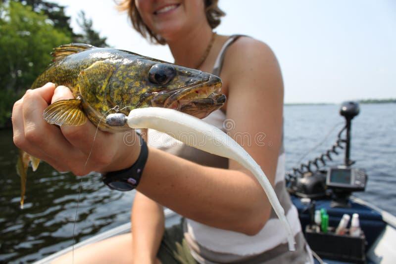 Kvinnafiske för Walleye arkivfoton
