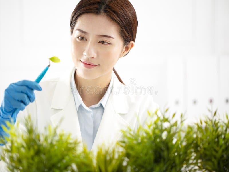 Kvinnaforskare som kontrollerar växten arkivfoton