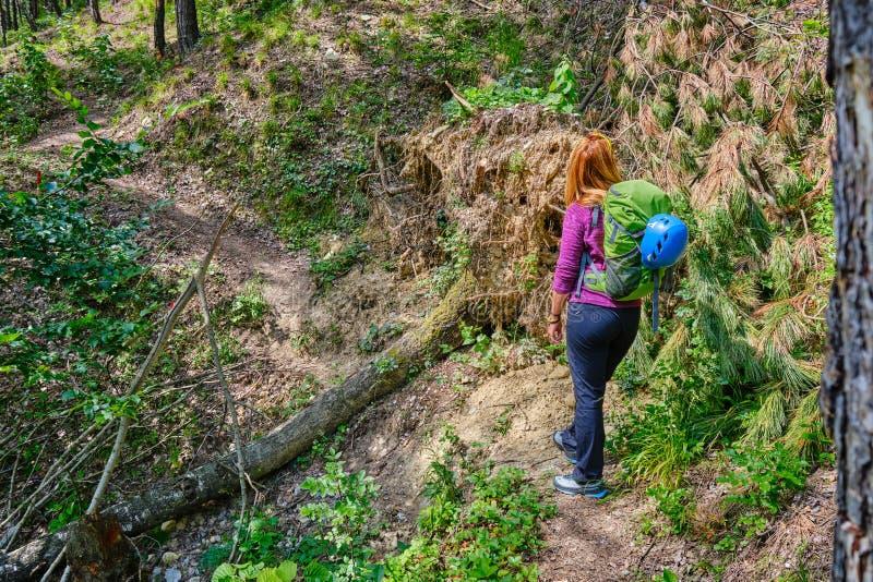 Kvinnafotvandraren med ryggsäcken och den alpina hjälmen, på en bergslinga, med ett enormt sörjer trädet som är sönderrivet över  arkivbild