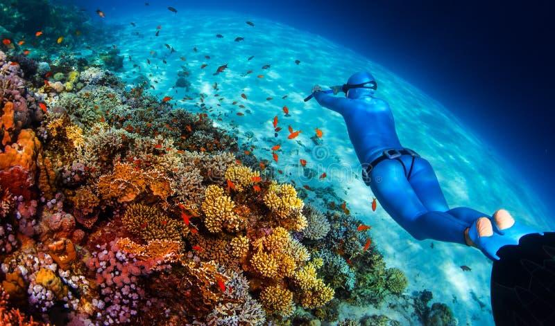 Kvinnafreediver glider över den livliga korallreven fotografering för bildbyråer
