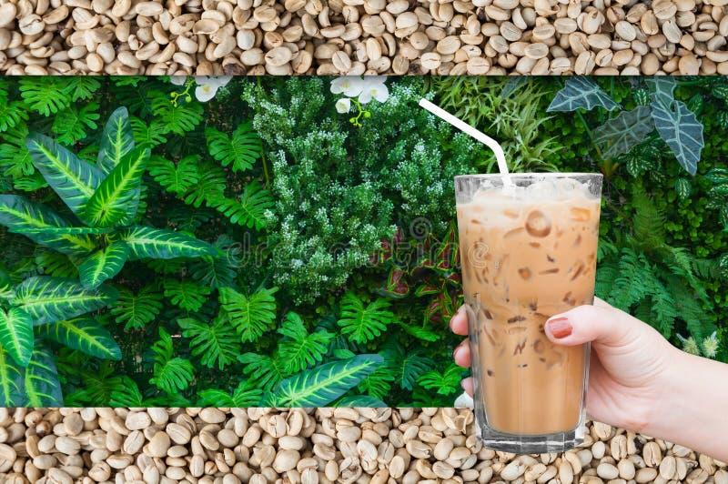 Kvinnahand som rymmer det glass med is kaffet på den gröna naturen och rå bakgrund för kaffebönor royaltyfri foto