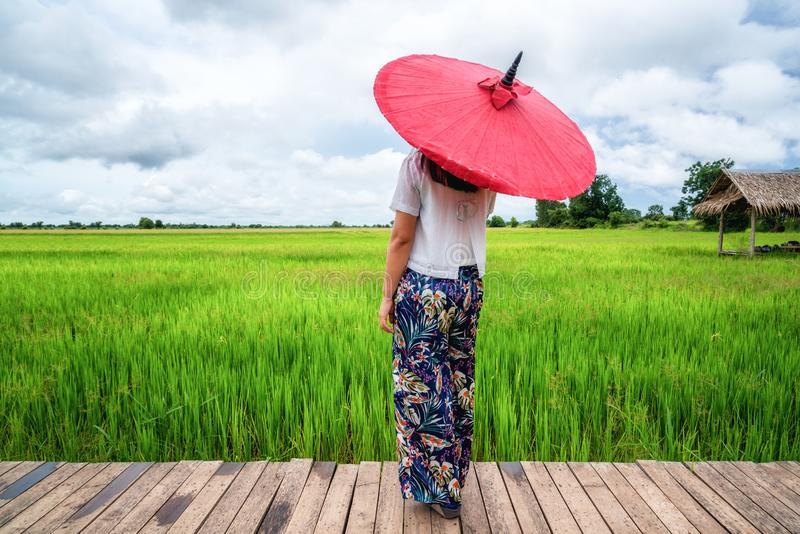 Kvinnahandelsresande som fotvandrar asiatiskt risf?ltlandskap arkivfoton