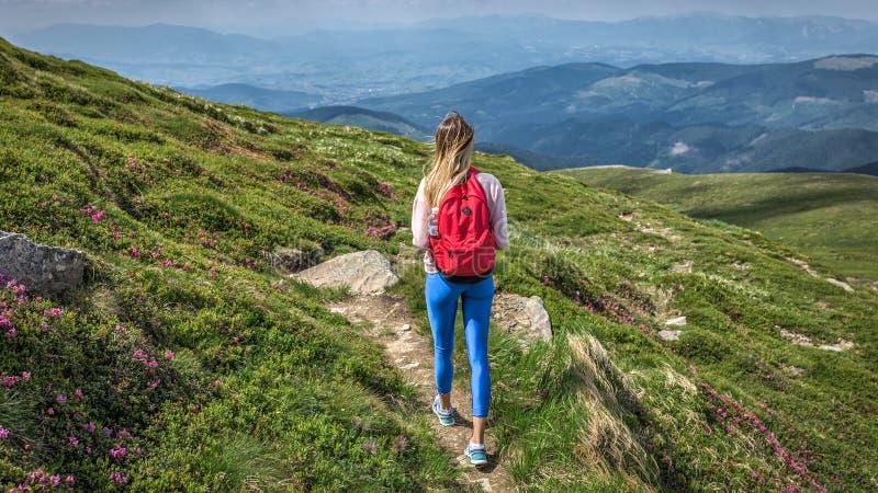 Kvinnahandelsresanden som är utomhus- med ryggsäcken, går utanför tur i stigning för bergsommarvandring royaltyfri foto