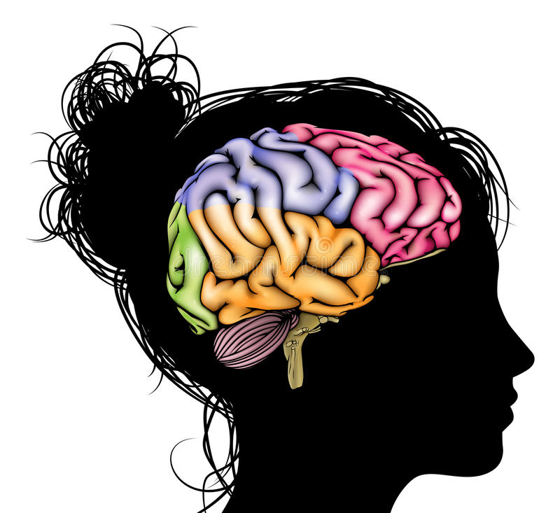 Kvinnahjärnbegrepp stock illustrationer