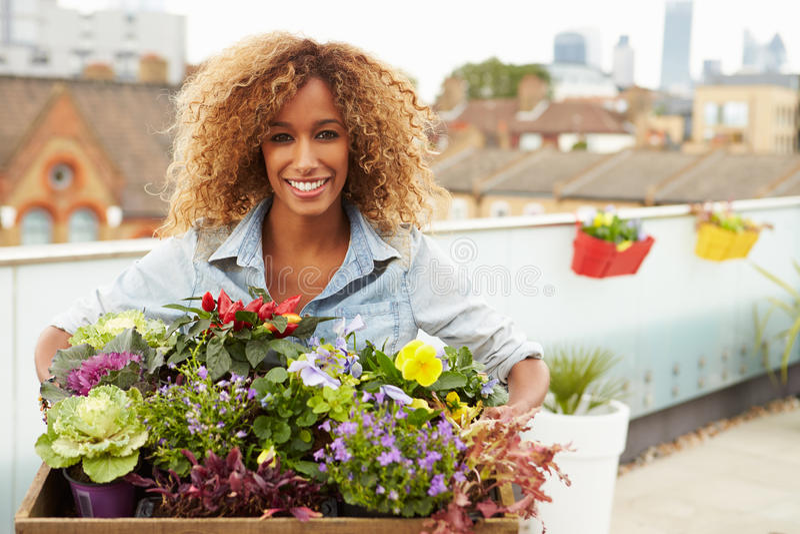Kvinnainnehavask av växter på takträdgård fotografering för bildbyråer