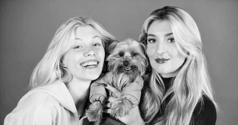 Kvinnakramyorkshire terrier Den Yorkshire terriern ?r den mycket tillgivna ?lska hunden som kr?ver uppm?rksamhet gulligt hundhusd arkivbild