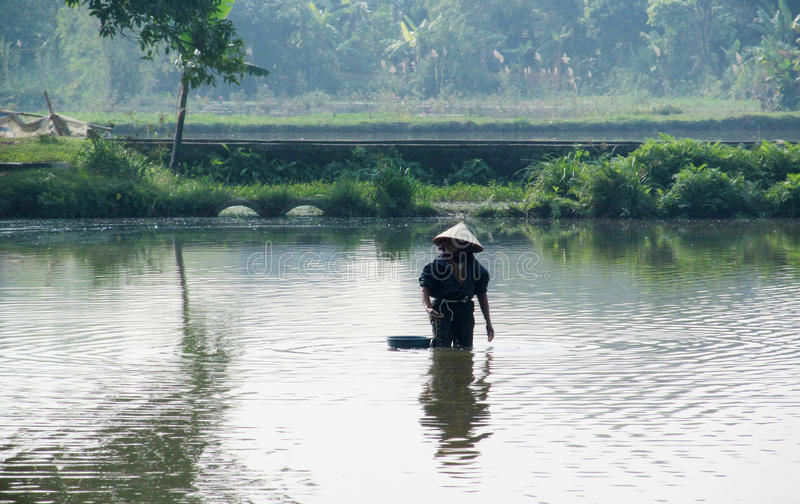 Kvinnan i Vietnam som bär traditionellt triangulärt sugrör, gömma i handflatan hattar royaltyfri bild