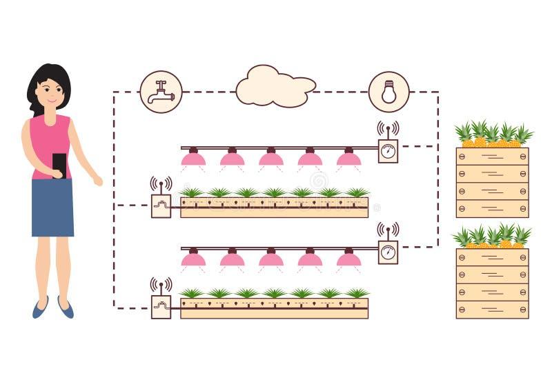 Kvinnan kontrollerar den smarta lantgården och jordbruket Övervakning och kontroll av temperaturen, fuktighet, ljus nivå Odling a vektor illustrationer
