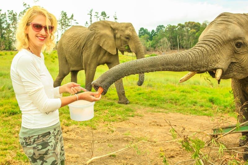 Kvinnan matar elefanten arkivbild