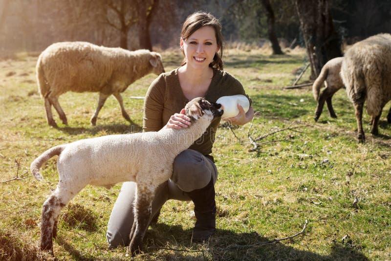 Kvinnan matar ett lamm med flaskan av mjölkar, djurskydd och royaltyfri foto