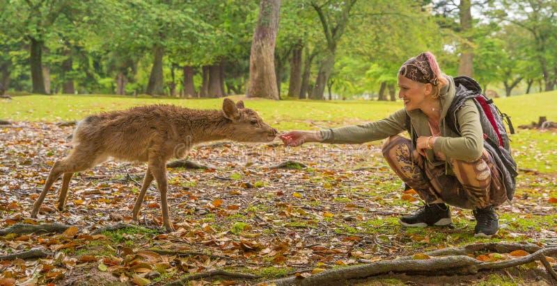 Kvinnan matar Nara hjortar arkivbilder