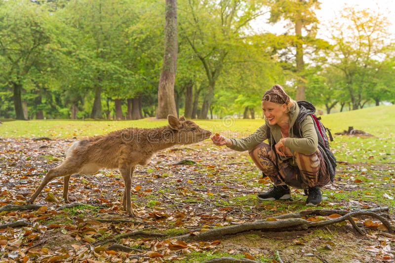 Kvinnan matar Nara hjortar royaltyfri fotografi