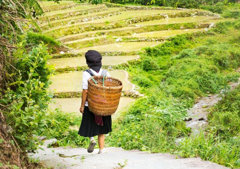 Kvinnan med den bärande korgen som går runt om ris, terrasserar fältet in arkivbild