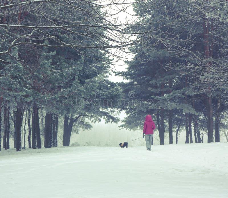 Kvinnan med den lilla hunden som går i vinter, parkerar royaltyfri bild