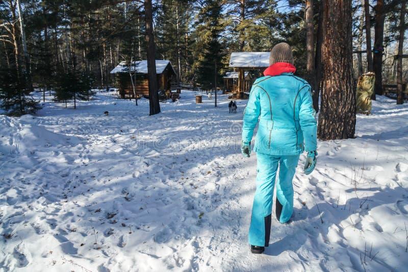 Kvinnan med den stack ullhatten och vinterlaget går på snö som går till träkabinen i skog royaltyfri bild