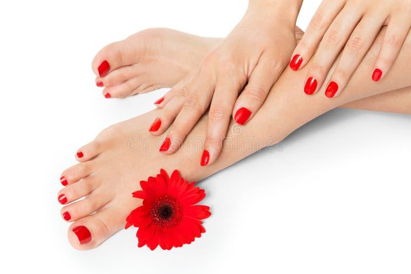 Kvinnan med härligt manicured rött spikar arkivbild