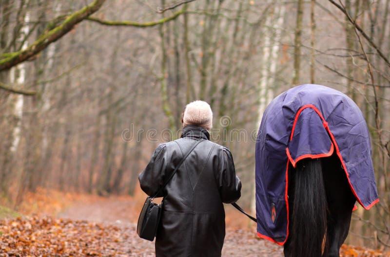 Kvinnan och en häst går i parkerar royaltyfri bild