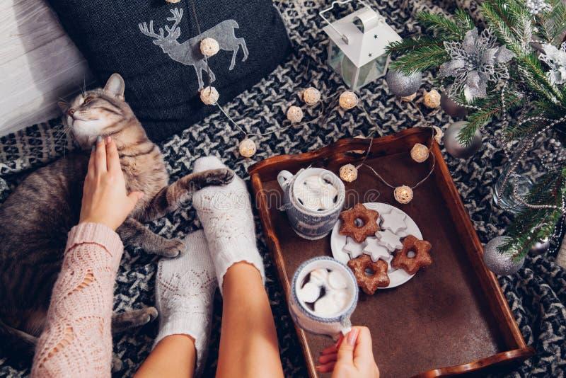 Kvinnan rymmer en kopp av choklad under julgranen, medan spela med hennes katt arkivfoto