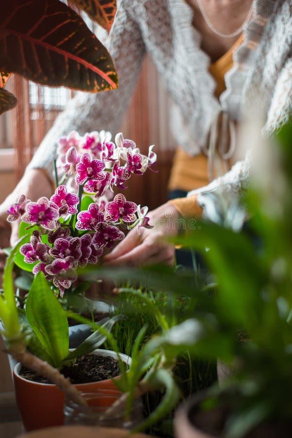 Kvinnan som att bry sig för orkidé, blommar lodlinje arkivbild