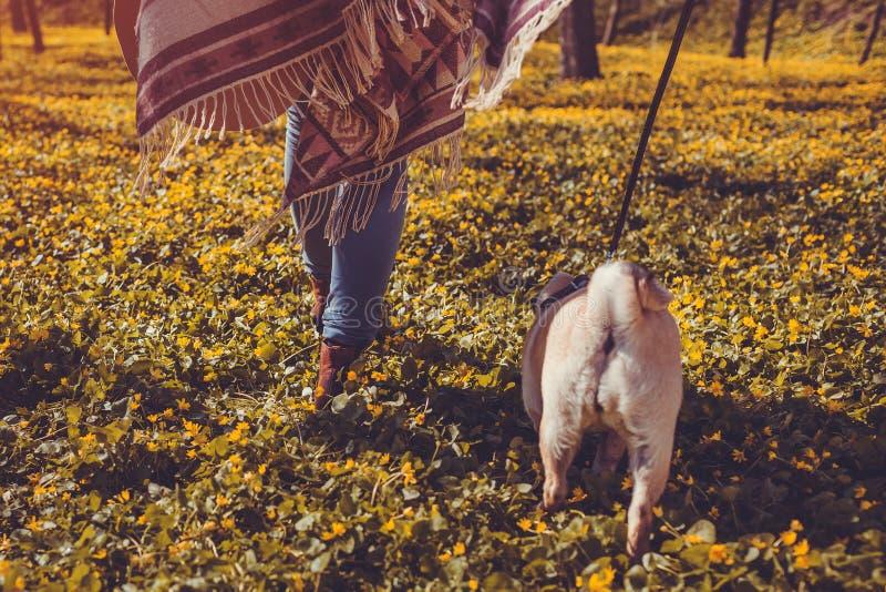 Kvinnan som går mopshunden i spring för valp för vårskog lycklig bland guling, blommar i morgonen Hund som tycker om naturen royaltyfria foton