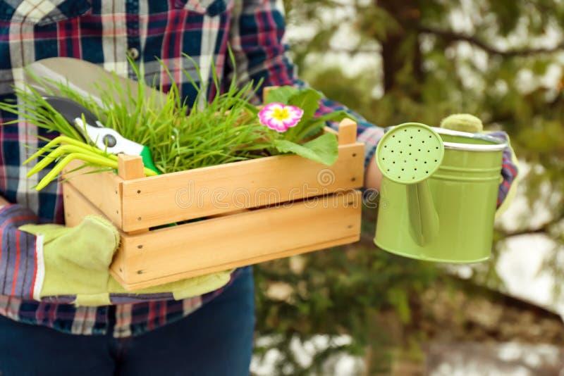 Kvinnan som rymmer att bevattna kan och träspjällådan med gröna växter utomhus royaltyfri bild