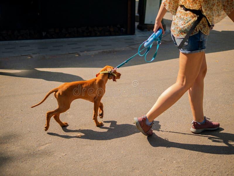 Kvinnan som tar hunden för, går utomhus parkerar in fotografering för bildbyråer